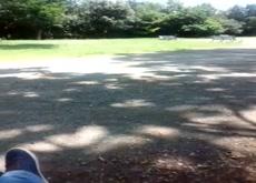 dickflash in park